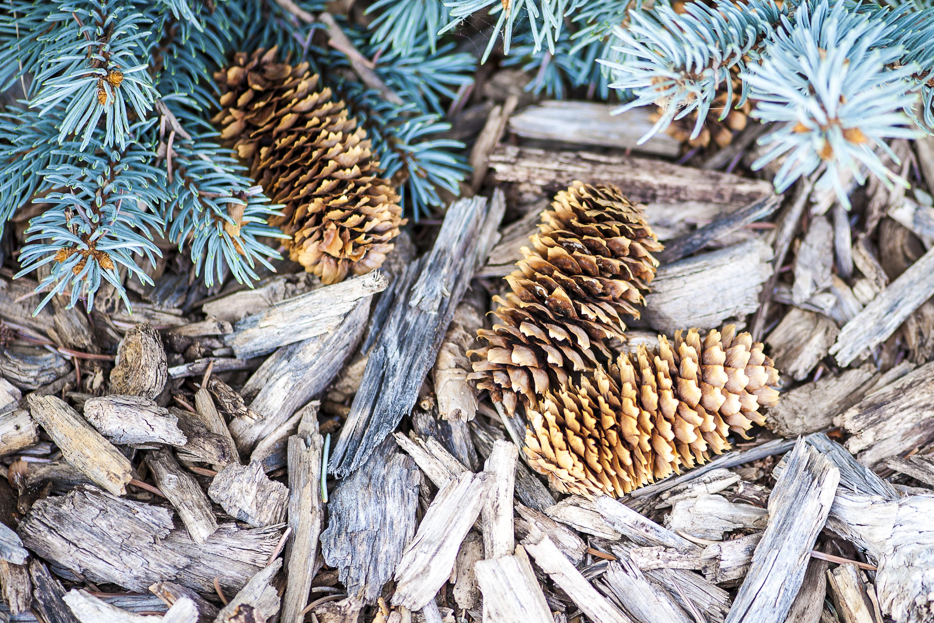 Three Good Reasons To Practice Winter Mulching