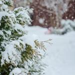 Winter Garden Mulch, Massachusetts