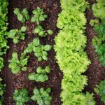 What to plant in your garden in Central Massachusetts the month of May